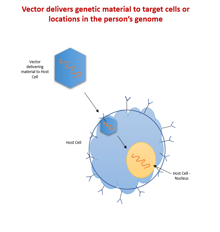 BlogImage2_What-are-viral-vectors-and-how-do-they-work_EDL_6-9-2021-1