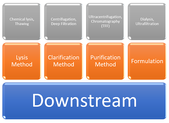 A visual of all Downstream Processes.
