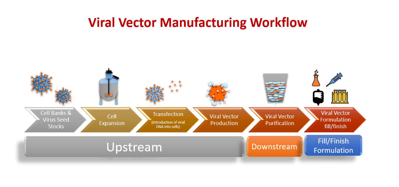 The Viral Vector Manufacturing Workflow, including Upstream Processes, Downstream Processes, and Fill/Finish Formulation